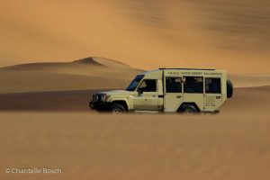 Our Eco Dune Tour (also known as the Living Desert Tour) focuses on the ecology of the dunes.