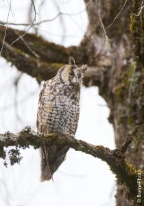 Our Ethiopian birding and photography tours offer an unforgettable experience and a great opportunity to view Ethiopia's magical wildlife, such as the Abyssinian Long-eared Owl