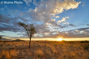 A Namib Desert sunset should be on everyone's bucket list. Sunsets at Namib Rand Nature Reserve can be experienced on our tailor-made photographic, reptile, botany and birding tours.