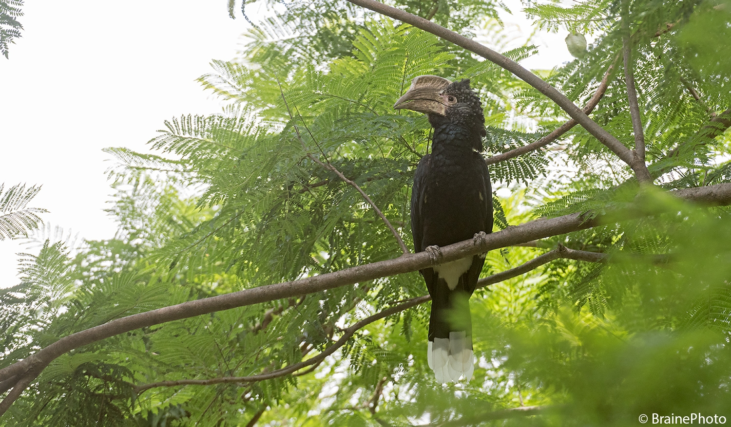 Our Ethiopian birding and photography tours offer an unforgettable experience and a great opportunity to view Ethiopia's magical wildlife, such as the Silvery-cheeked Hornbill