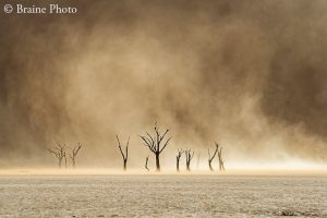 Our photography tours provide opportunities to photograph many exciting subjects including breath-taking sunsets and sunrises, contrasting and wonderful landscapes, Himba, San and Herero cultures, colonial architecture, ghost towns, other-worldly plants and extraordinary wildlife. Deadvlei is a photographer's dream