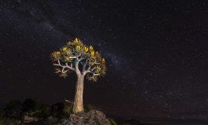 Quivertree, Miky way, Starscape, Landscape, Namibia, Aus